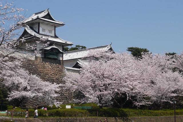 兼六園桜2.JPG